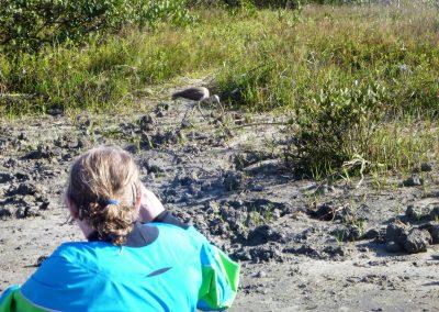 ibis matanzas inlet
